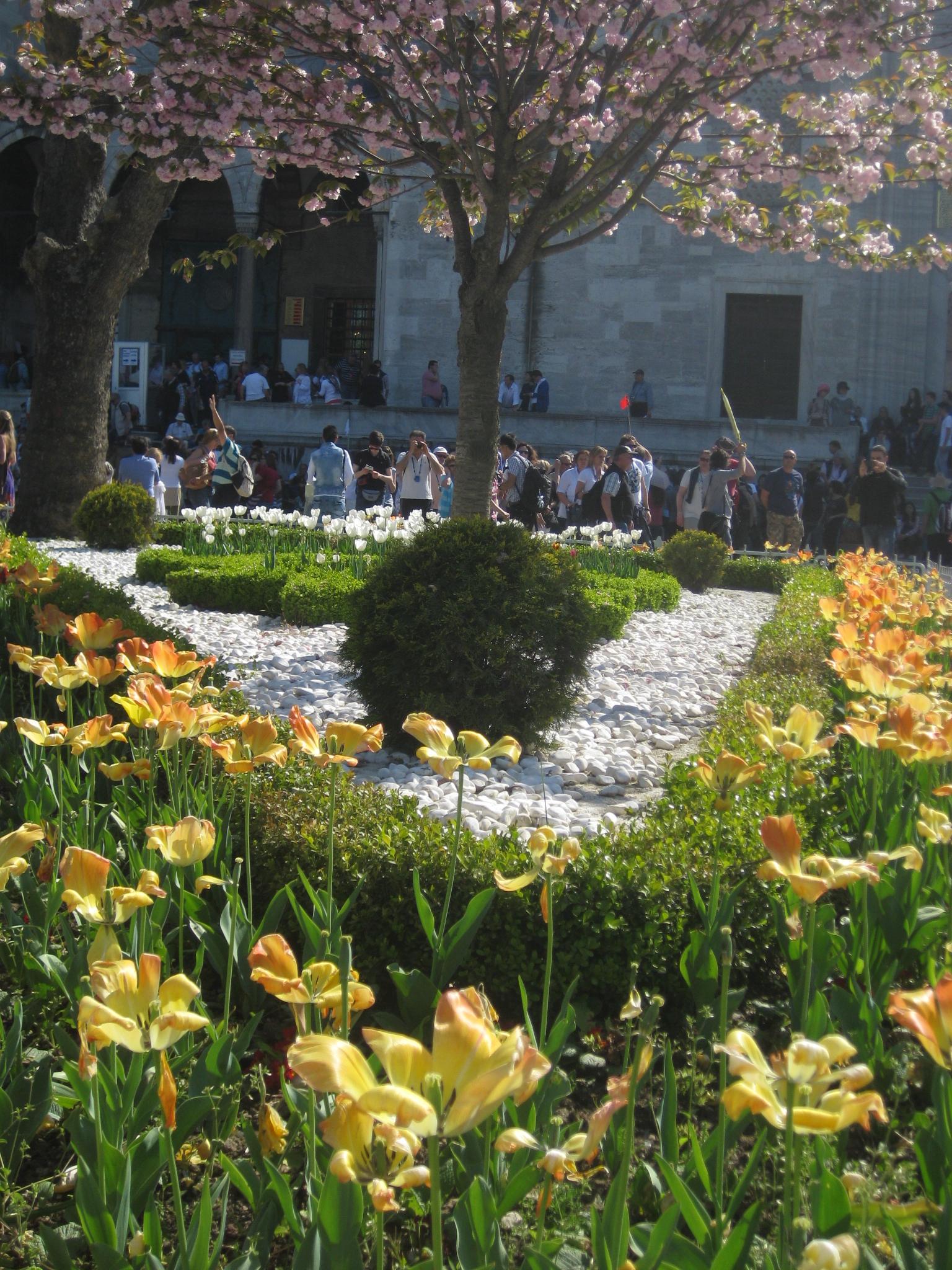 Filebeautiful blooming flower in garden of sultan ahmed mosque 04 filebeautiful blooming flower in garden of sultan ahmed mosque 04g izmirmasajfo