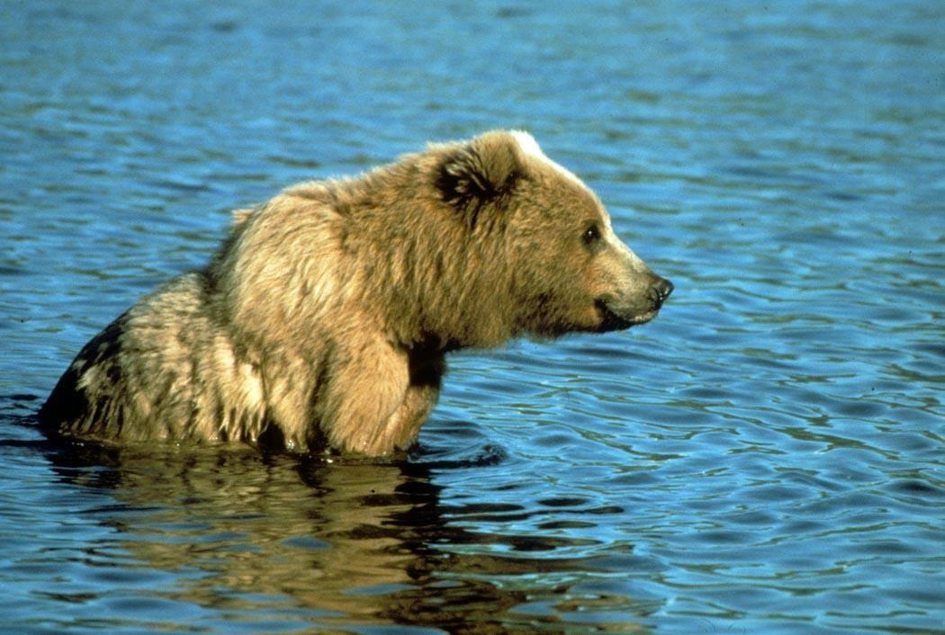 The Island Bear Grylls  Imbs