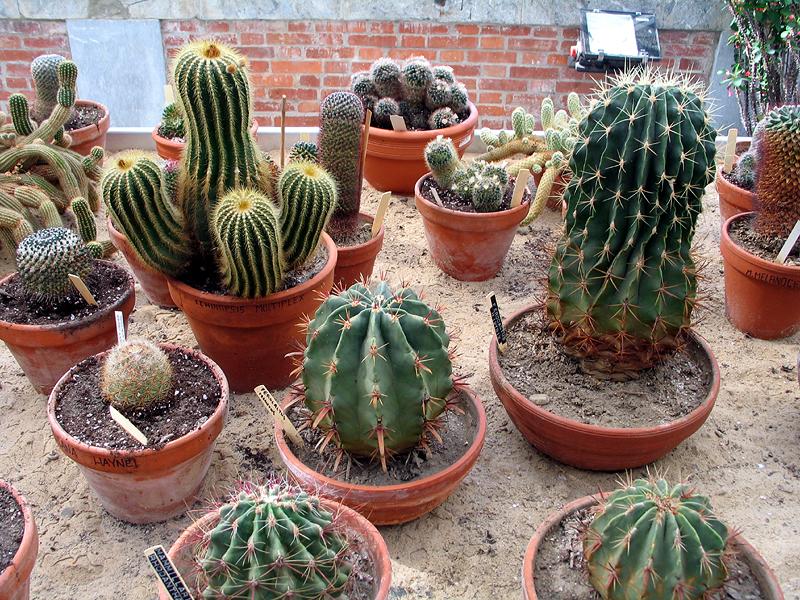 groupe de cactus