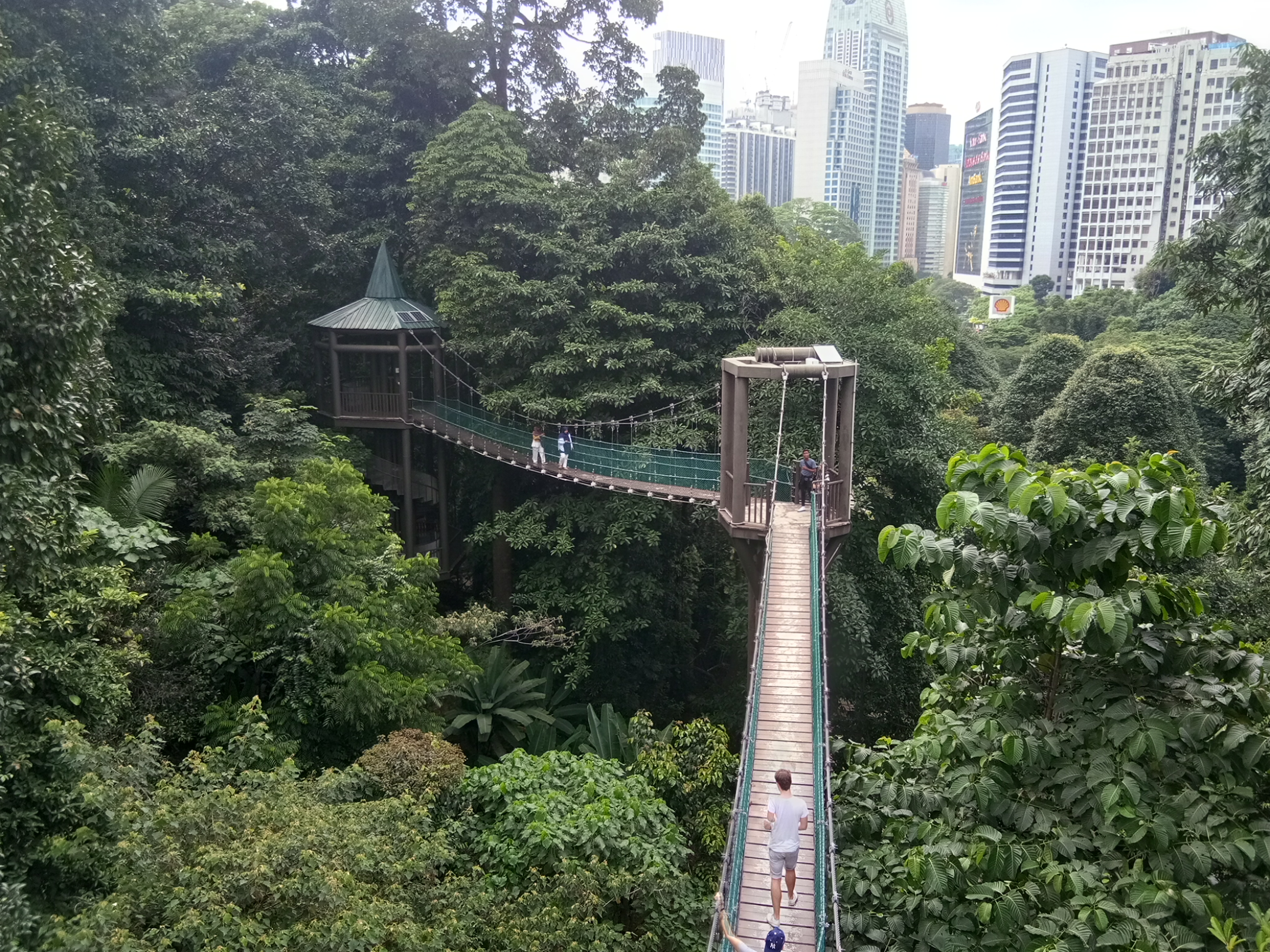 「kl forest eco park」的圖片搜尋結果