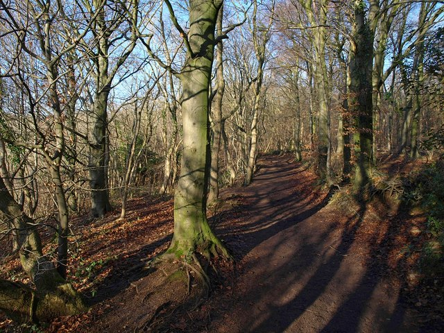 Cotswold Way in Westridge Wood - geograph.org.uk - 1653856