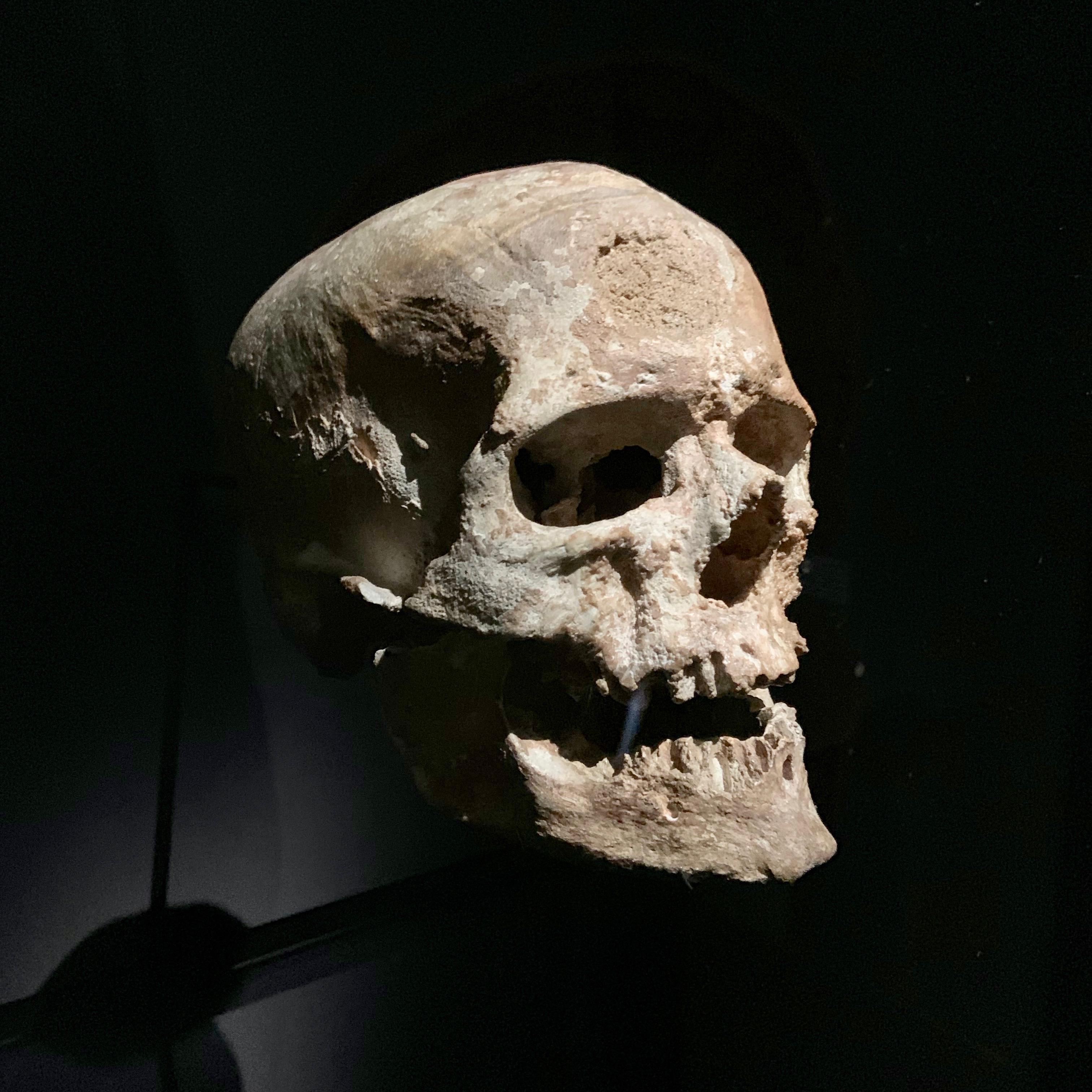 Homme de Cro-Magnon — Wikipédia