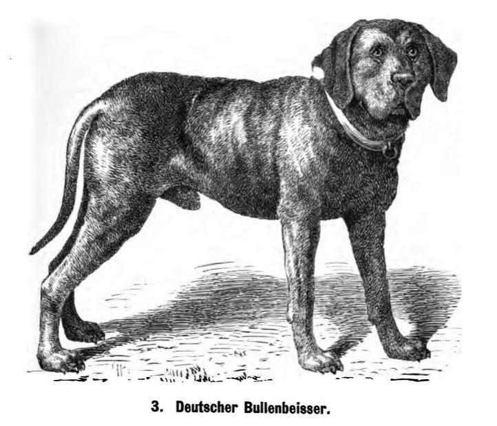 Deutscher_Bullenbeisser_1889_Friedrich.p