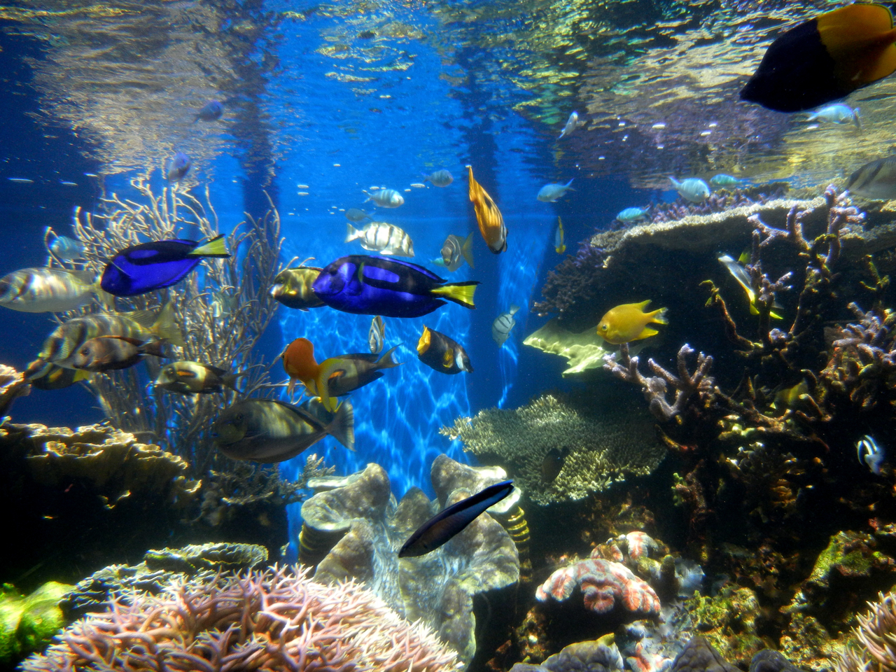 Description Fish tank (2).jpg