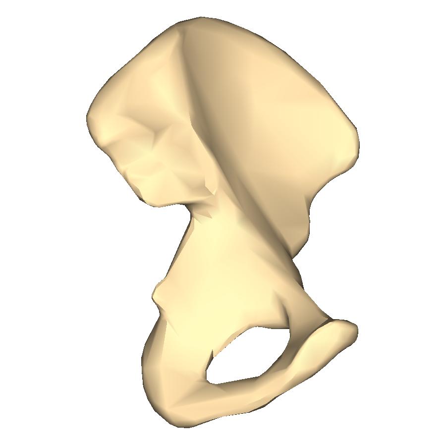 Anatomy of male pelvis