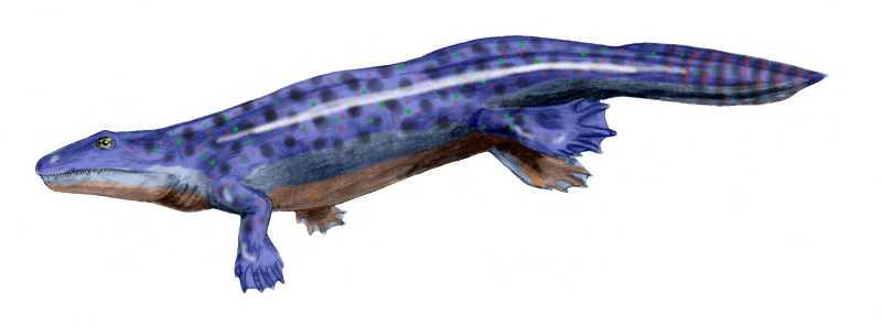 Depiction of Ichthyostegidae