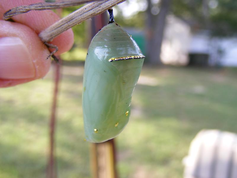 A chrysalis, wrapped in my cocoon