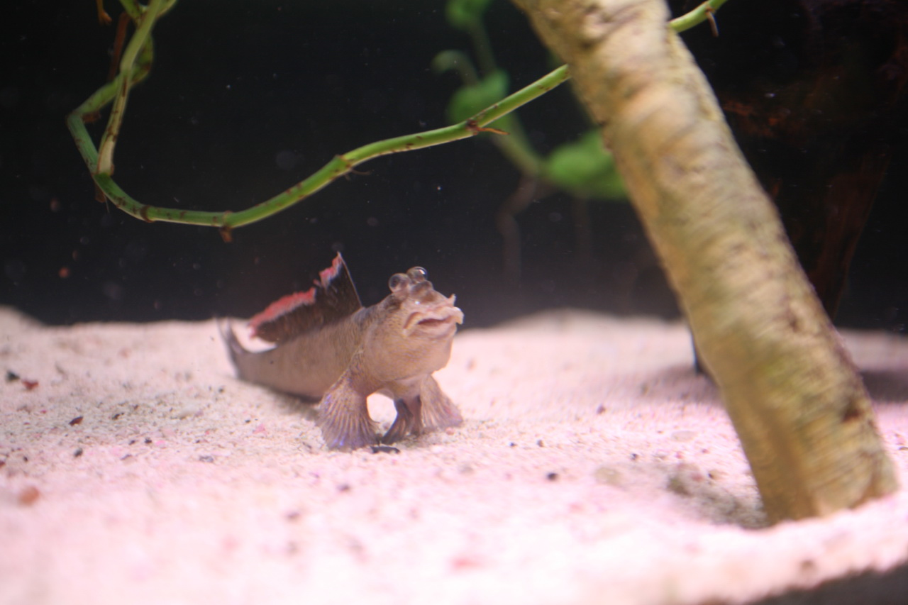 Tidal Aquarium