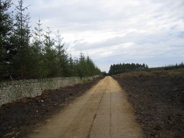 New road in Slaley Forest - geograph.org.uk - 620476