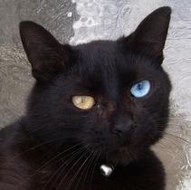 Арты черный кот