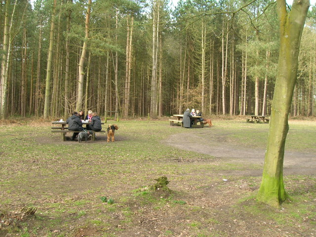 Picnic area, Blidworth Woods - geograph.org.uk - 1761704