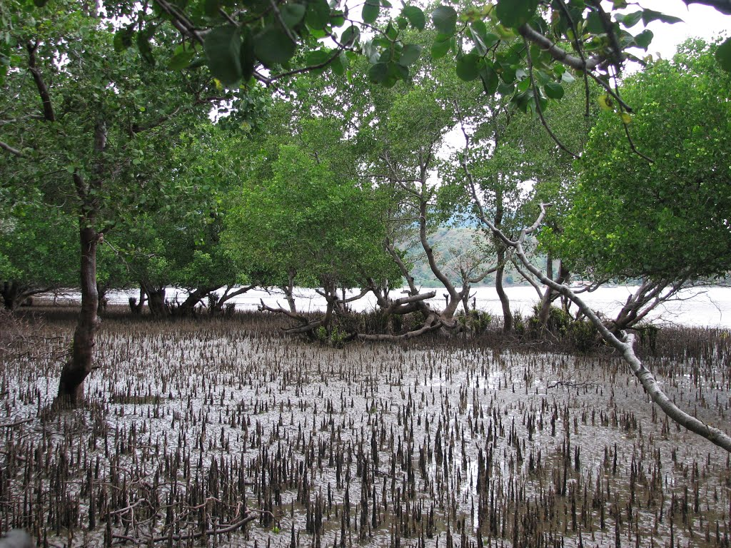 Mangroves for the Future