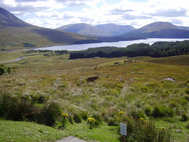 Red deer and blue loch. - geograph.org.uk - 819041