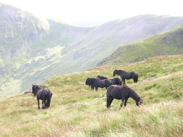 File:Semi-wild fell ponies - geograph.org.uk - 292430.jpg