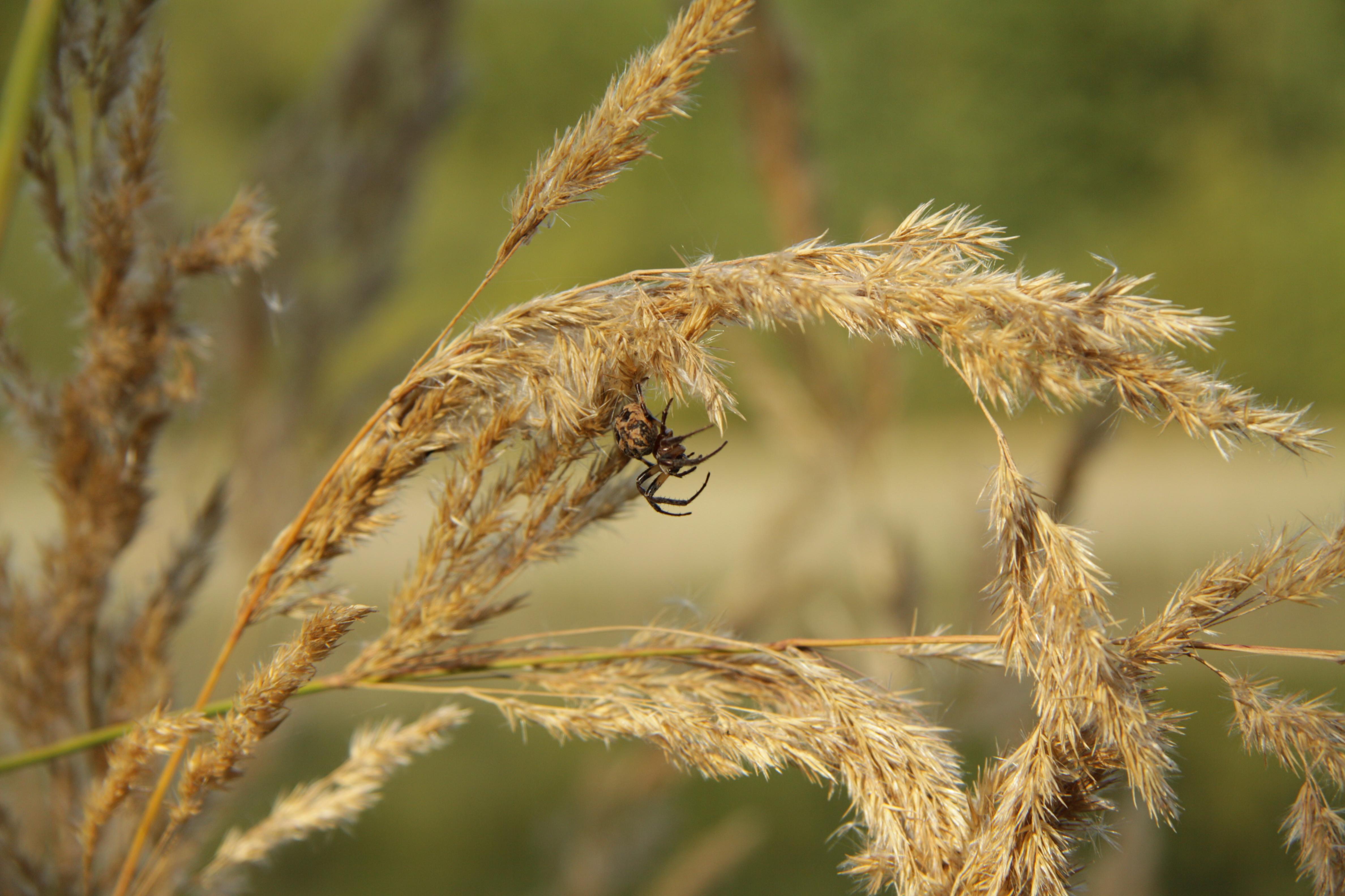 Spider in natural monument Zeman in 2011 (2).JPG