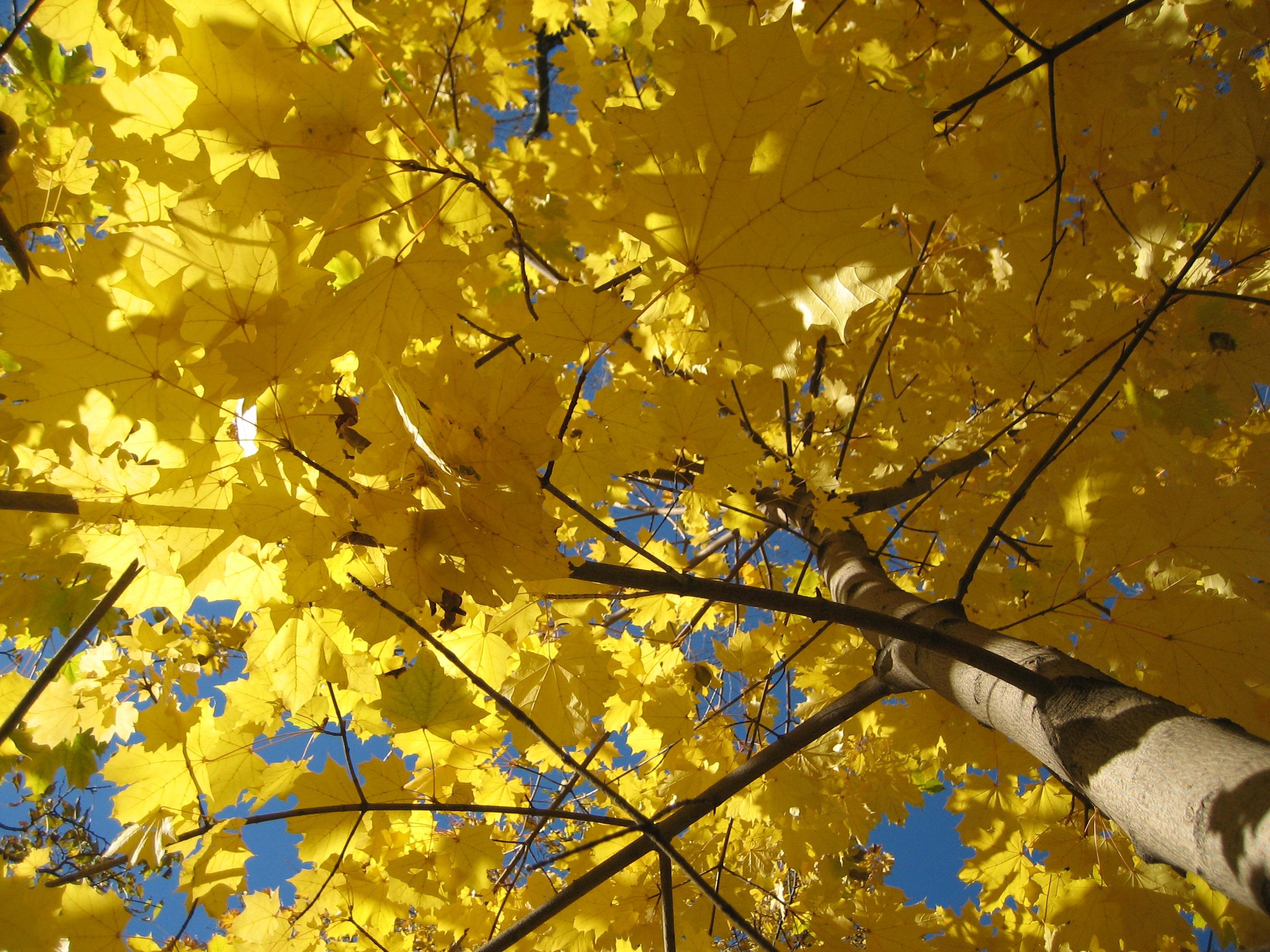imagenes de otoño (homenaje a la tierra)