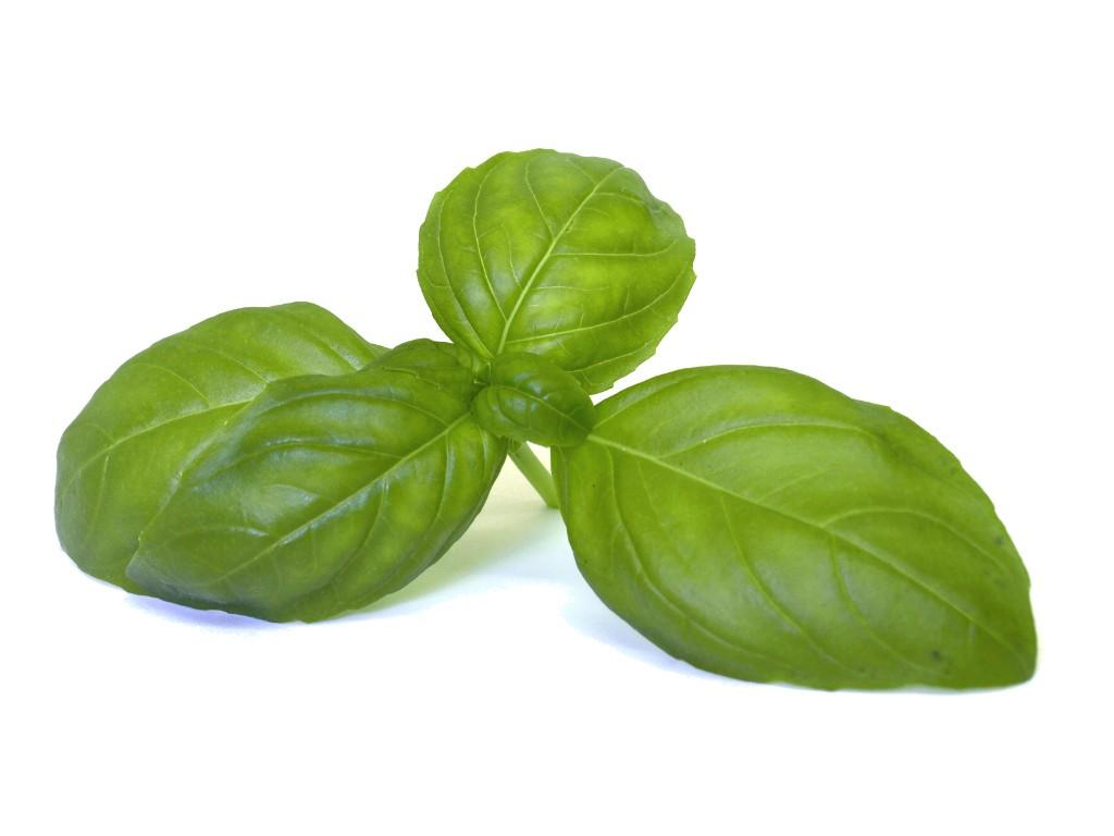 Basilikum-Blätter.jpg