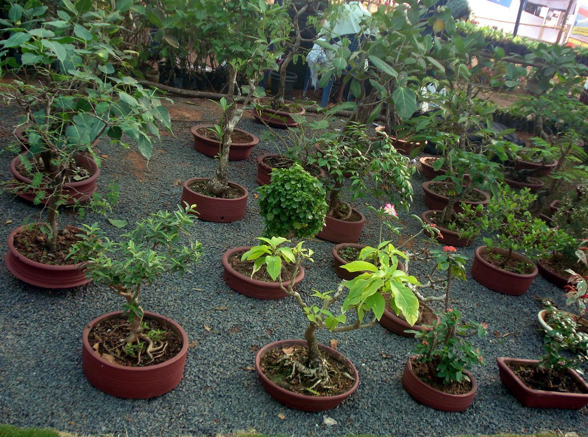 File bonsai tree garden jpg wikimedia commons for Garden trees photos
