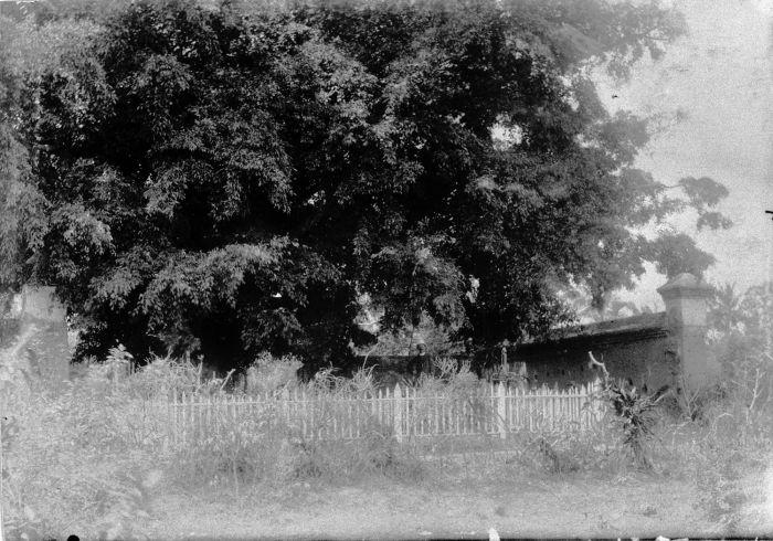 File:COLLECTIE TROPENMUSEUM Muur en omheining bij een grote boom TMnr 60008643.jpg