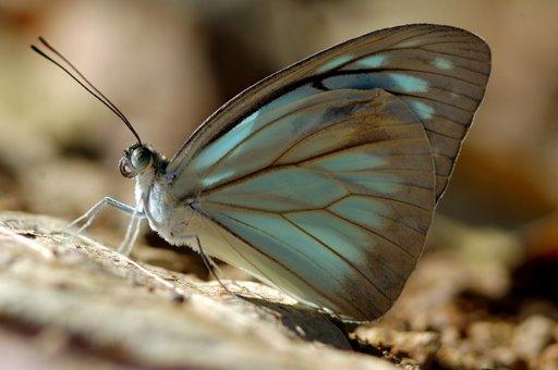 An entomology lesson on larvae metamorphosis - 1 3