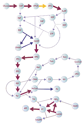 Modified version of Image:Metabolic Network Mo...
