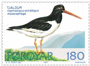 Faroe stamp 023 oyster catcher.jpg