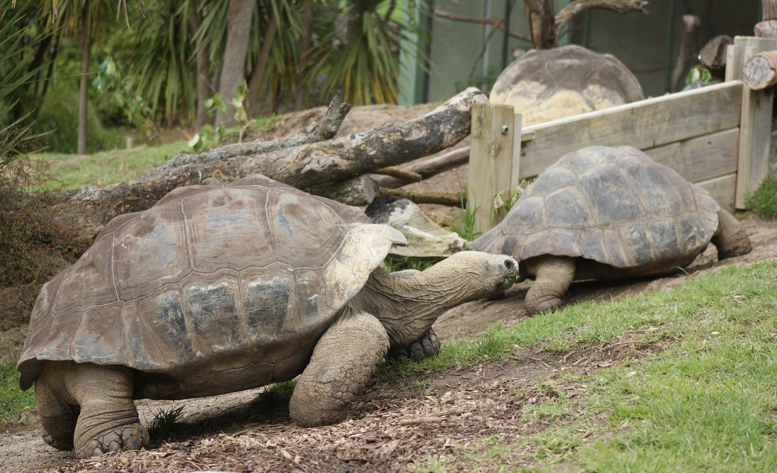 Turtle Back Zoo Savannah Cafe Menu