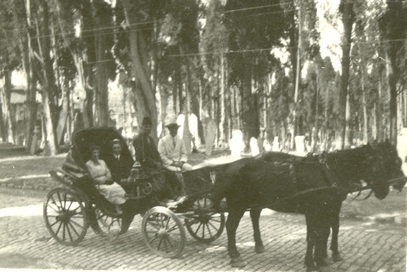 File:Horse And Carriage (9675170486).jpg