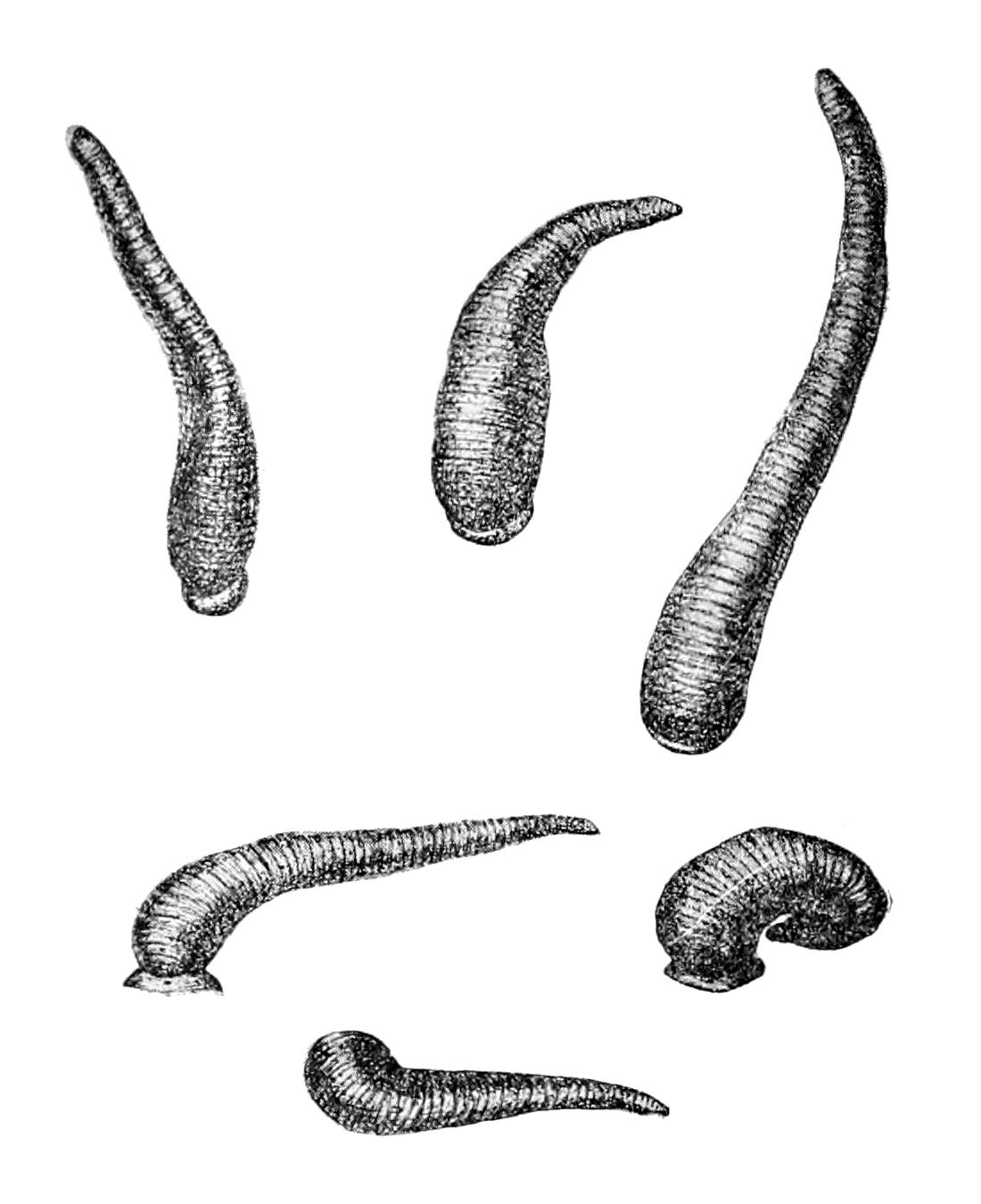 что пропить от паразитов в организме