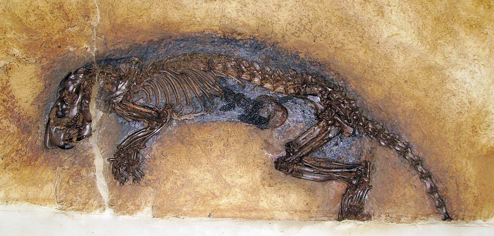 Fossil - Grube Messel