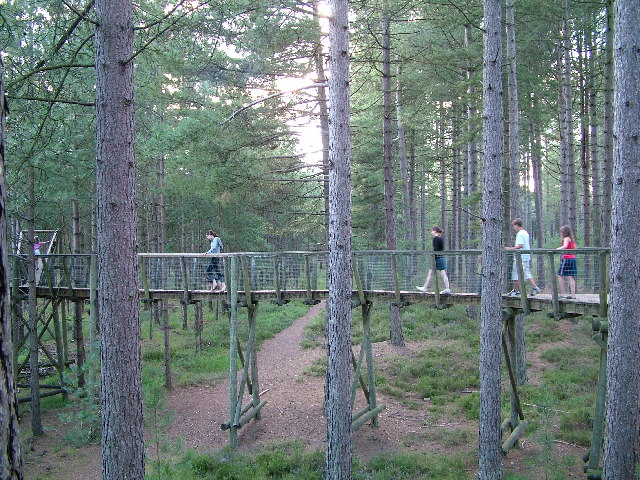 Moors Valley COuntry Park - geograph.org.uk - 83990