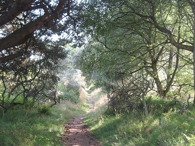 Path, Tentsmuir Forest - geograph.org.uk - 1438420