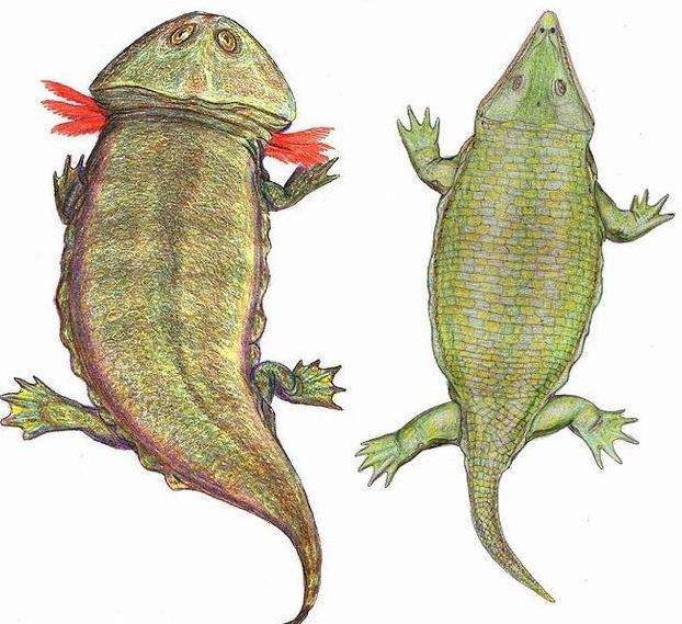 File:Plagiosauridae.jpg