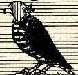 Sólyom, (heraldika).PNG