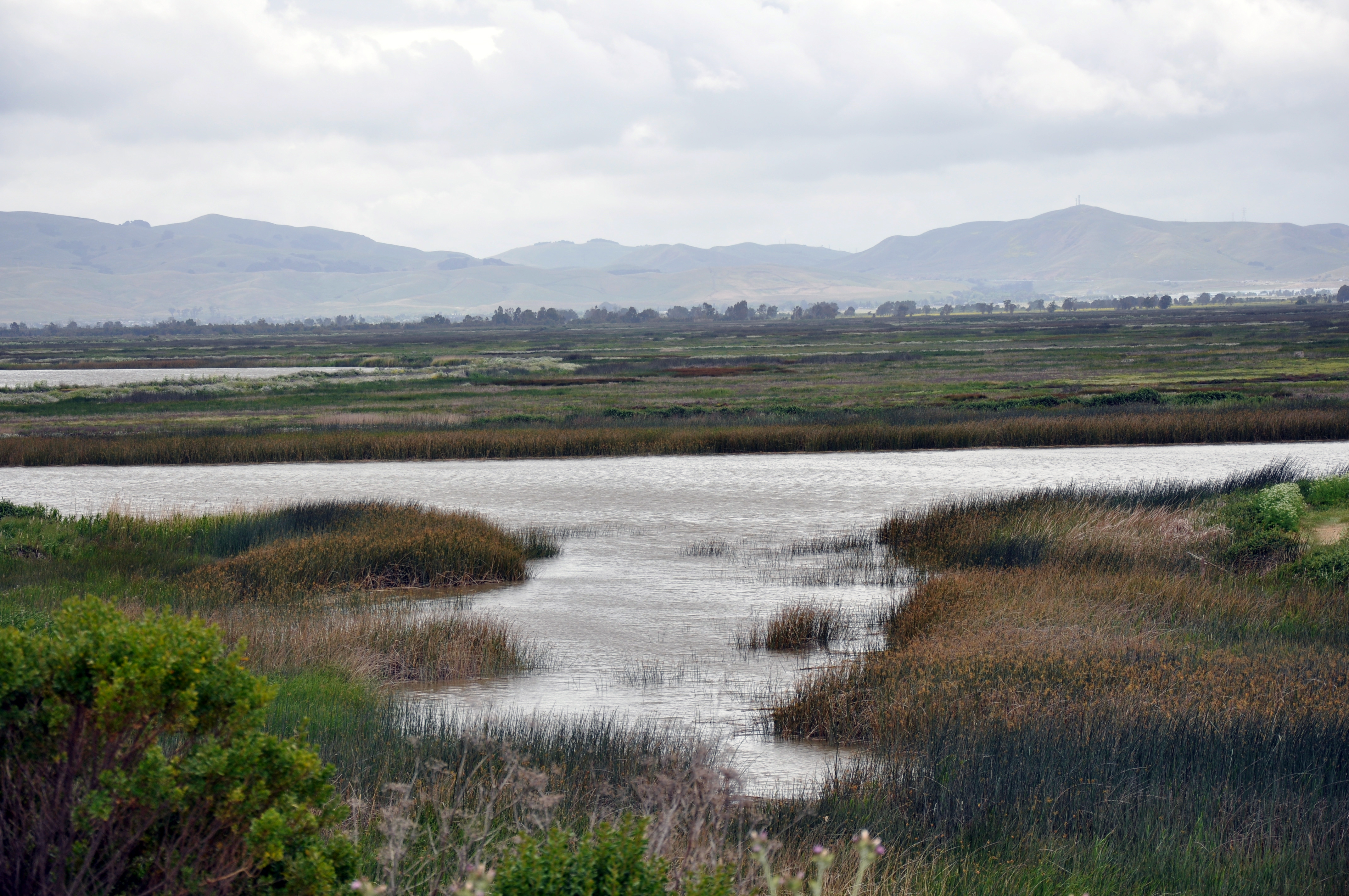 Suisun_Marsh_Overlook.jpg
