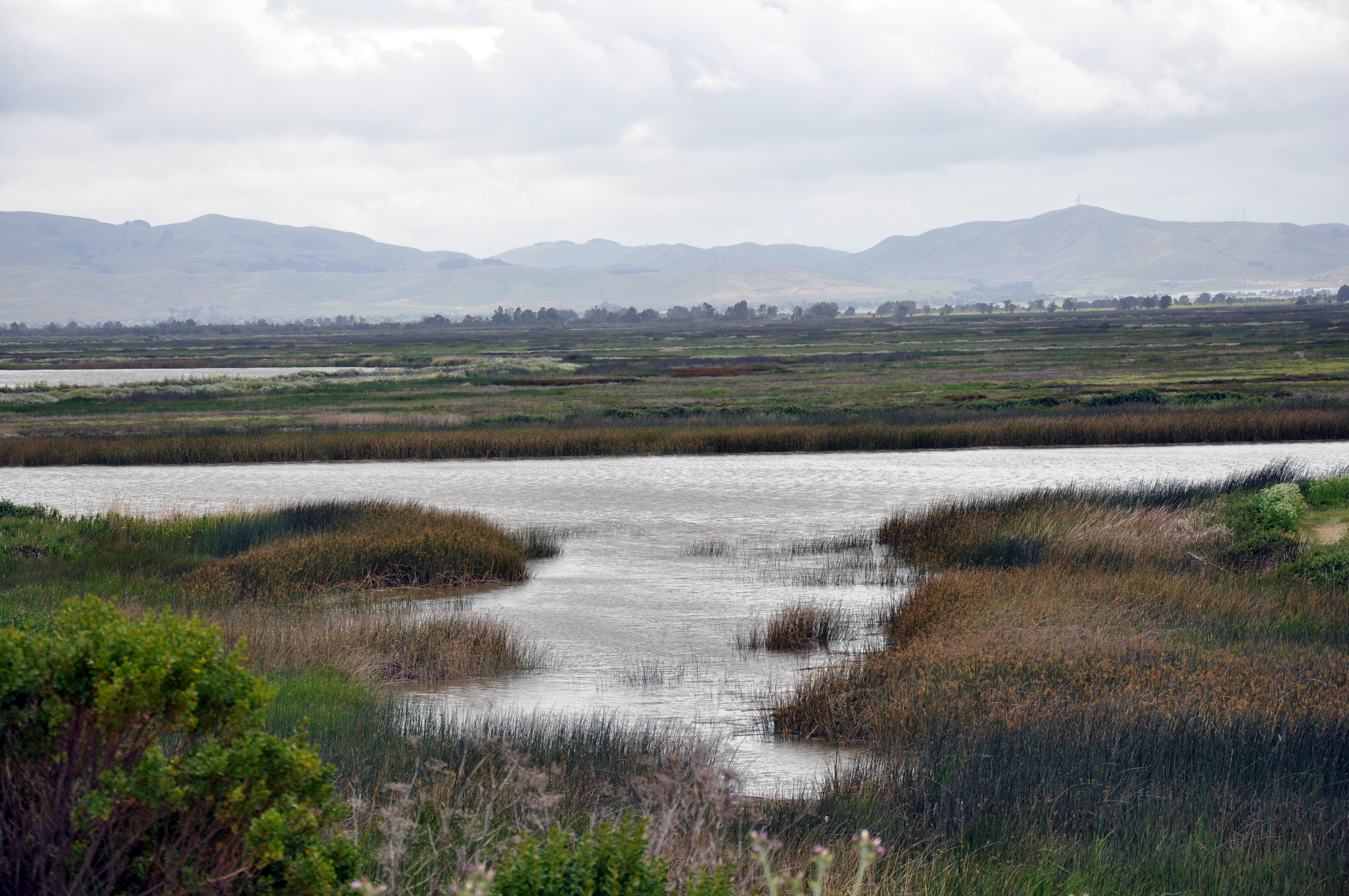Suisun Marsh Wikiwand