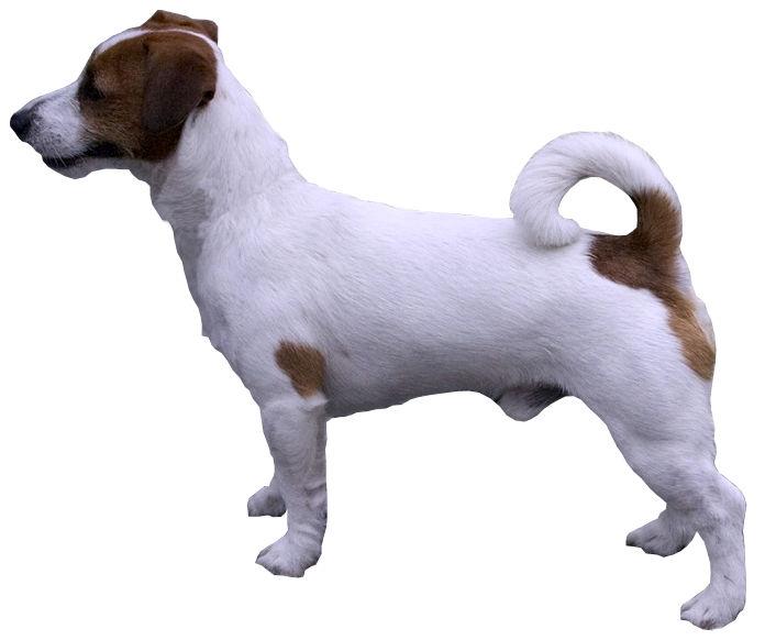 Petite chienne fr a le cul et la chatte demontes en dp - 2 part 4