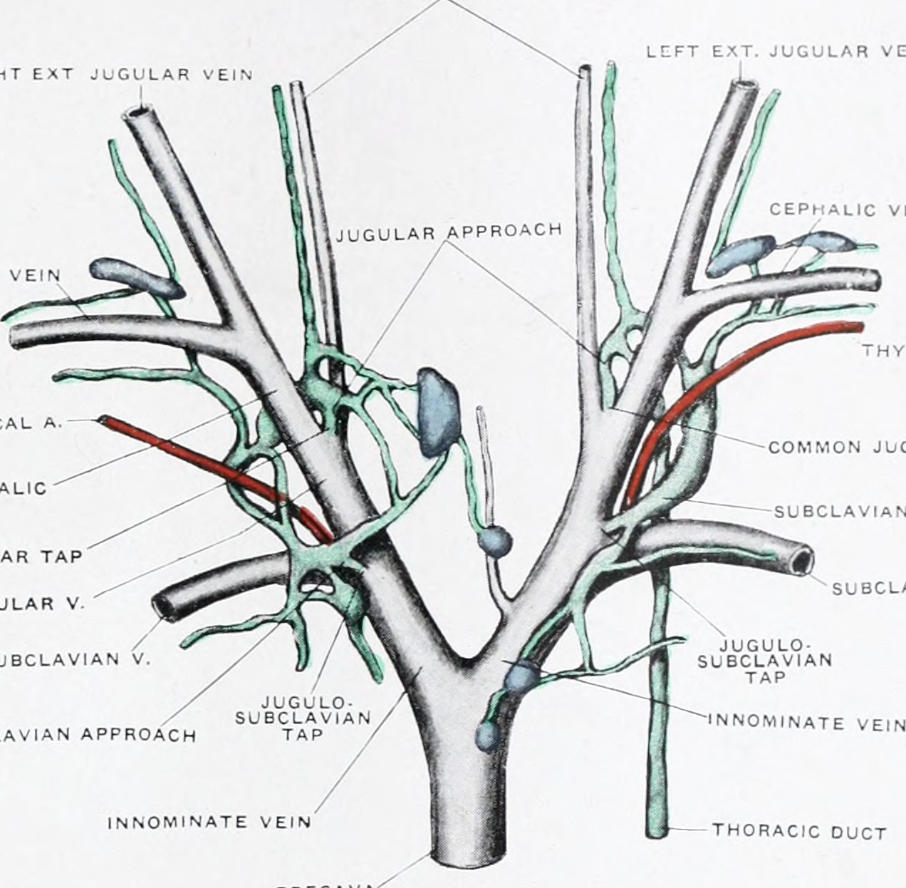 File:The anatomy and development of the systemic lymphatic vessels ...