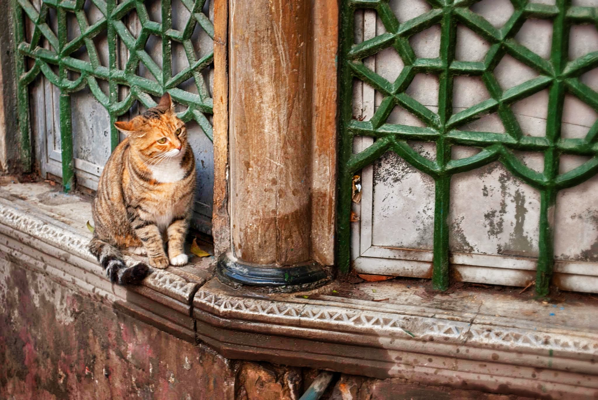 Cats and more cats, anyone is up for a trip to Istanbul right now? Source: Wikimedia