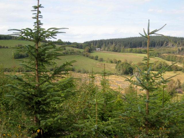 Tyddyn Amlwg, Dyfnant Forest - geograph.org.uk - 560295
