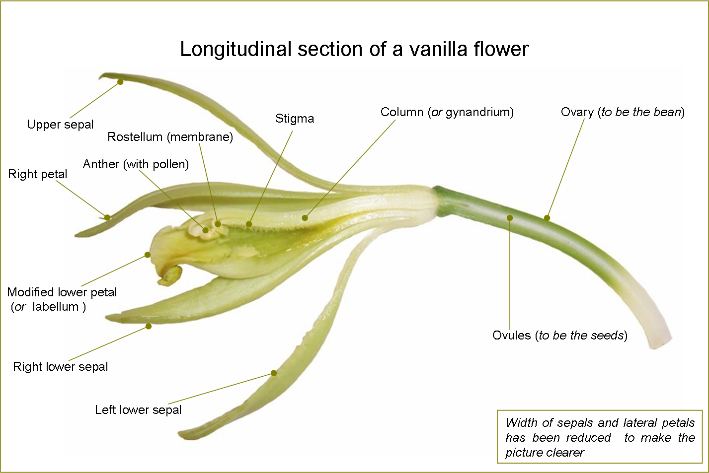 The Anatomy of a Bean Seed