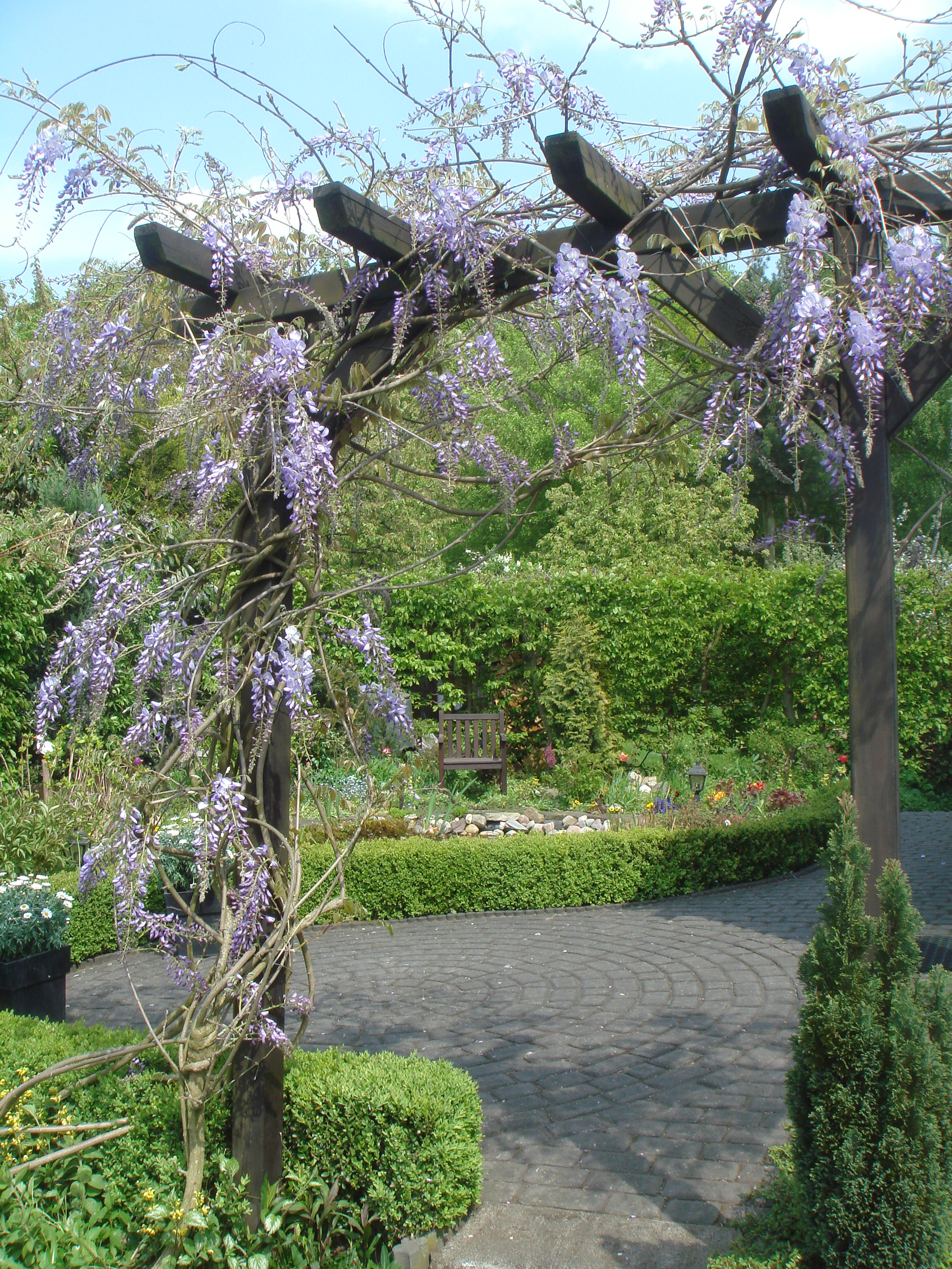 FileWisteria Sinensis An Pergola