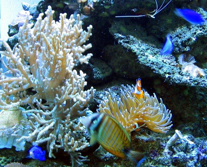 Riutta-akvaario – Wikipedia