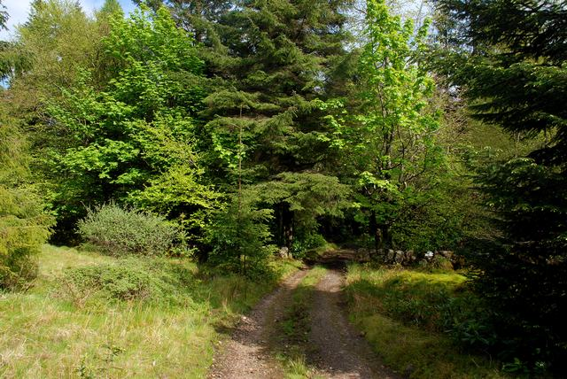Woodland track above Brodick Castle - geograph.org.uk - 1320915
