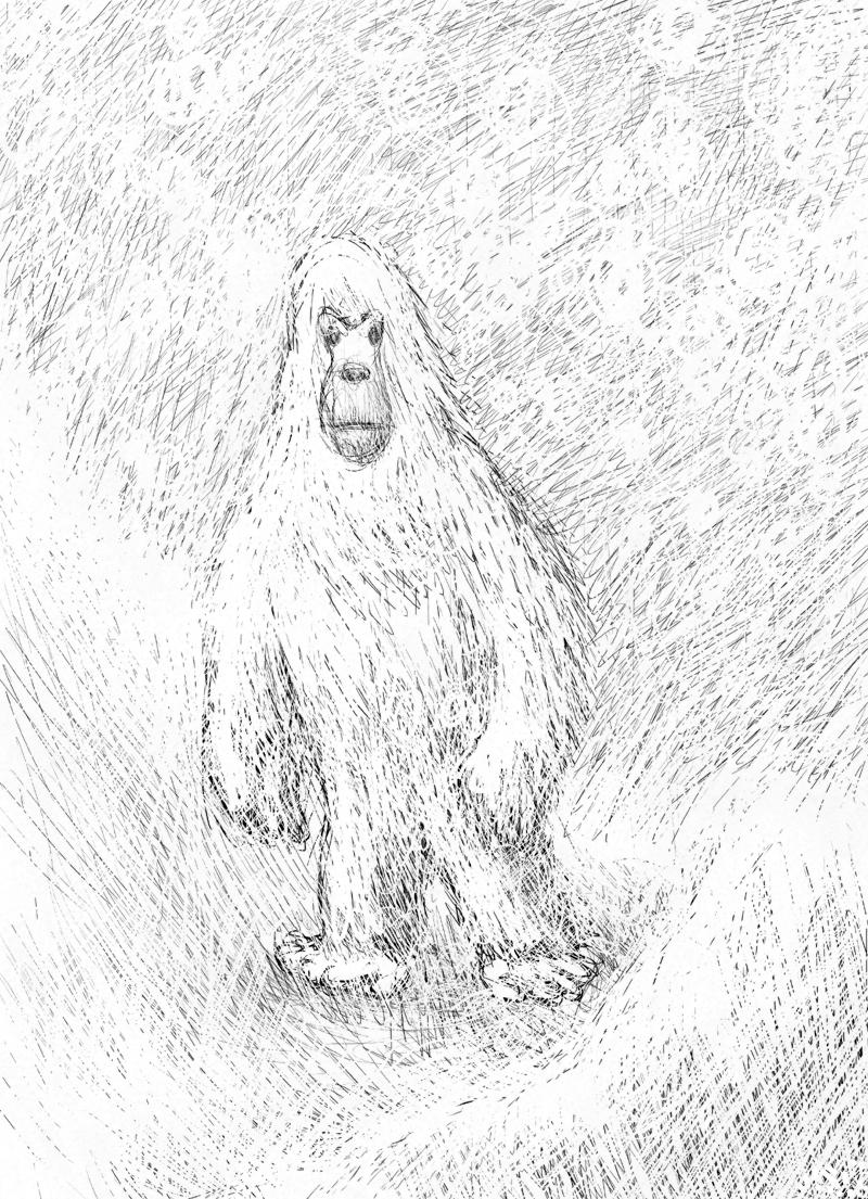 喜马拉雅山雪人之谜终 - wuwei1101 - 西花社