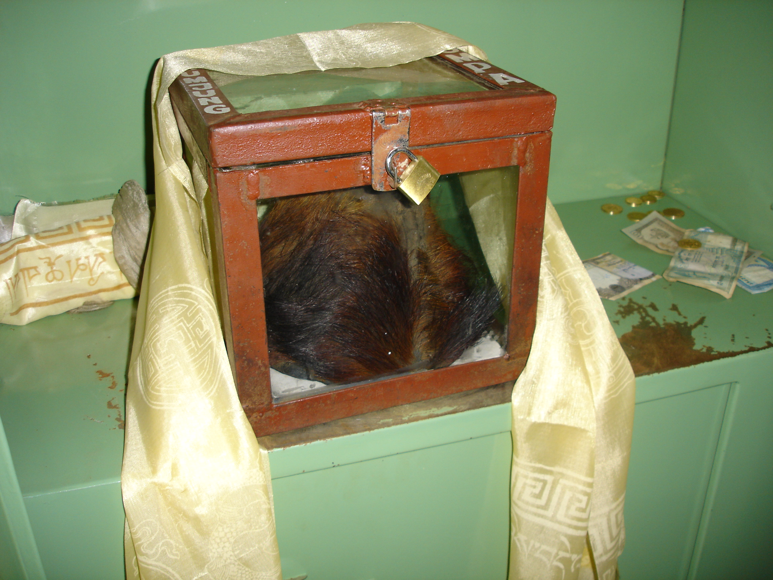 preserved scalp of Yeti