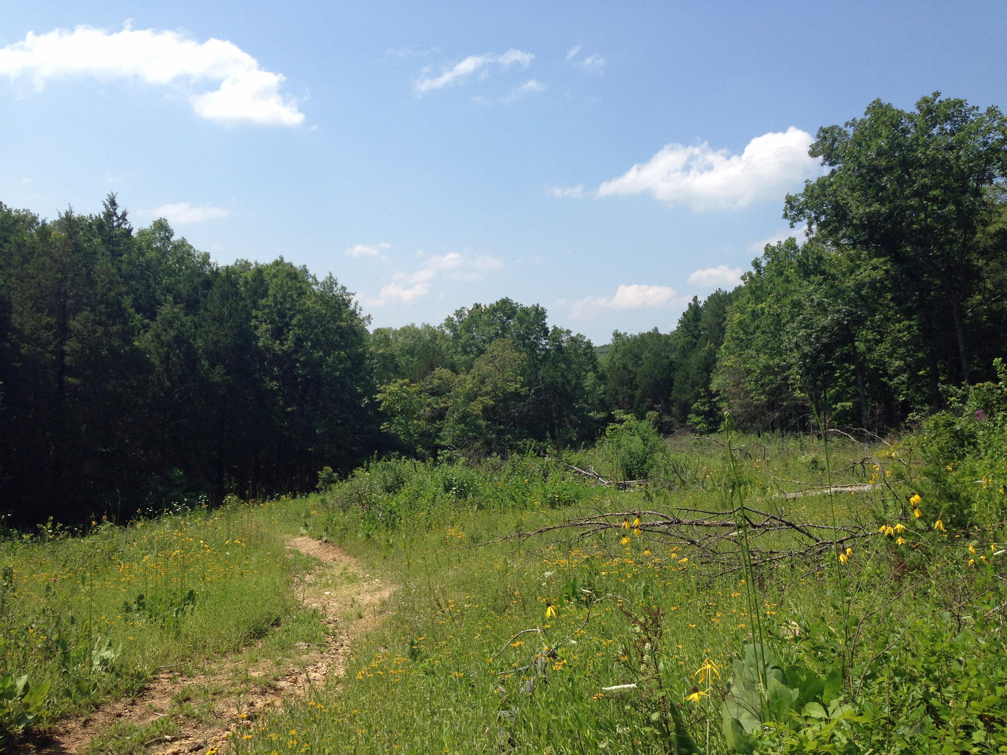 A restored Missouri glade (2013). Young Conservation Area.
