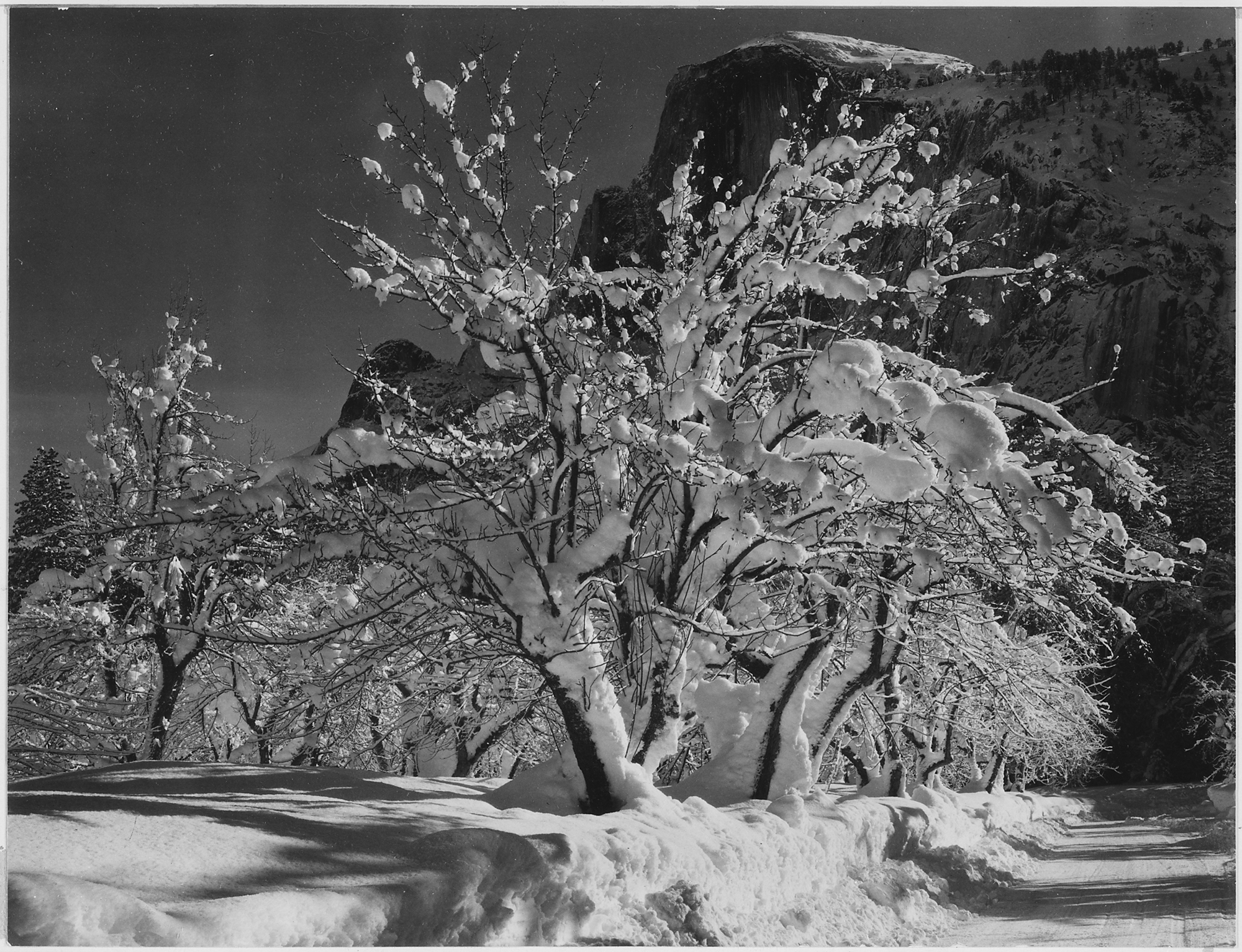 "Ansel Adams ""Half Dome, Apple Orchard""."