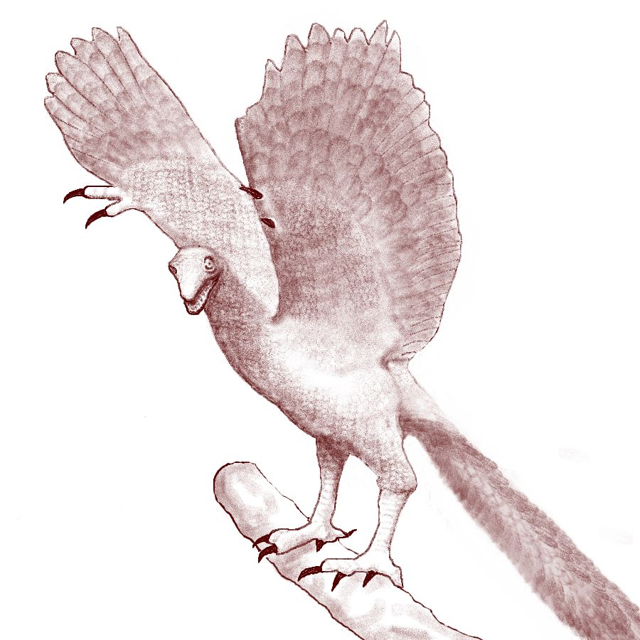 List of introduced species | Novum Terram Wiki | FANDOM powered by Wikia