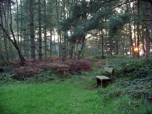 Bench, Sherwood Pines - geograph.org.uk - 273146